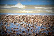 Beach Stones 24 x 36 wrapped canvas sold